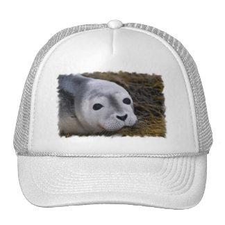 Gorra de béisbol dulce de la cría de foca