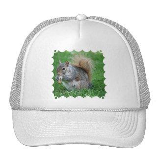 Gorra de béisbol gris de la ardilla