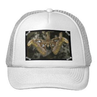 Gorra de béisbol inusual de la polilla