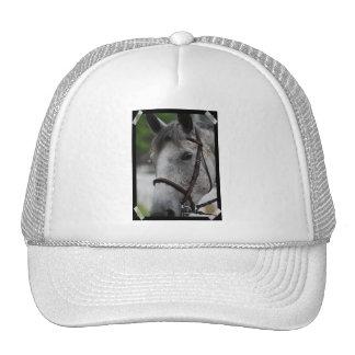 Gorra de béisbol lindo del caballo del Appaloosa