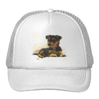 Gorra de béisbol negra de la chihuahua