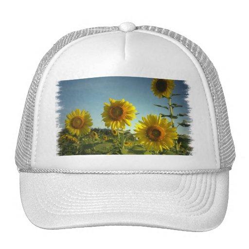 Gorra de béisbol orgánico del girasol del jardín