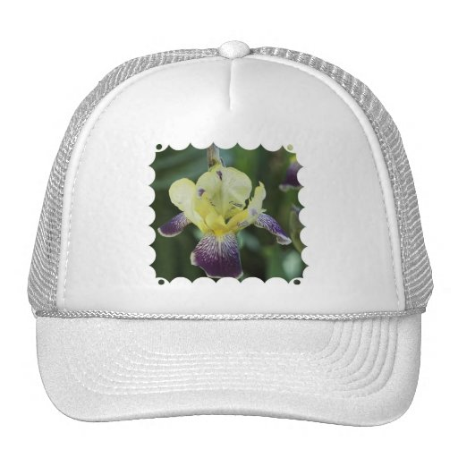 Gorra de béisbol raro de la orquídea