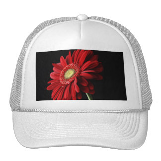 Gorra de béisbol rojo de la margarita de Gerber