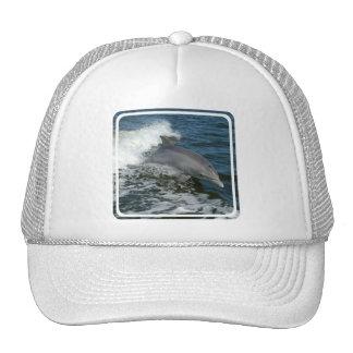 Gorra de béisbol salvaje del delfín