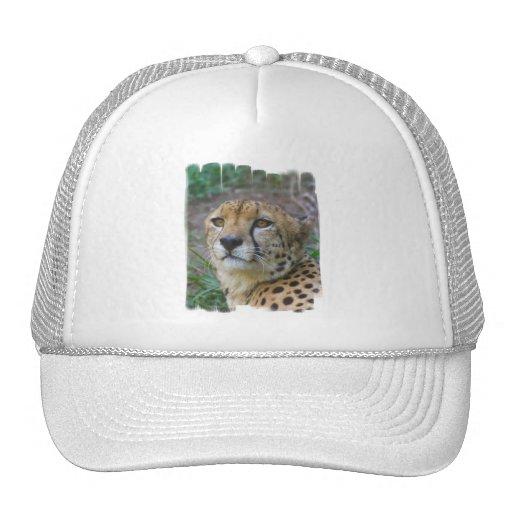 Gorra de béisbol salvaje del guepardo