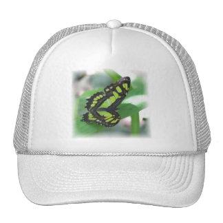 Gorra de béisbol verde de la mariposa