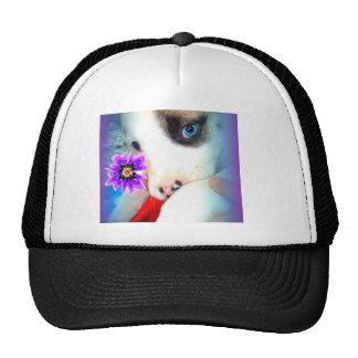 Gorra de Bella