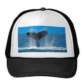 Gorra de la ballena del océano