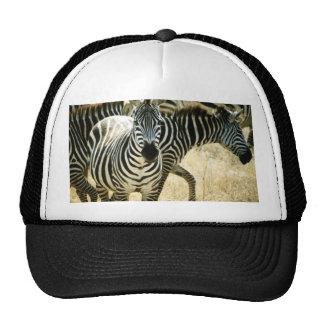 Gorra de la cebra