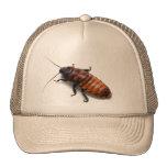 Gorra de la cucaracha