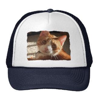 Gorra de la foto del gato del mac