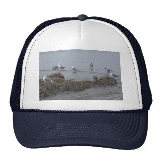 Gorra de la gaviota