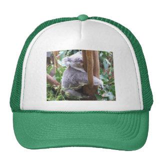 Gorra de la koala