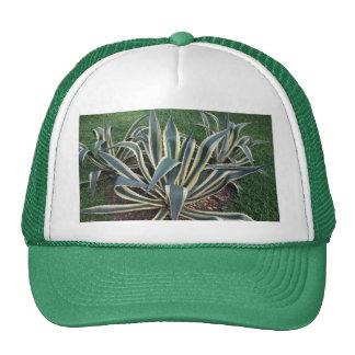 Gorra de la planta tropical de la lengua de la sue