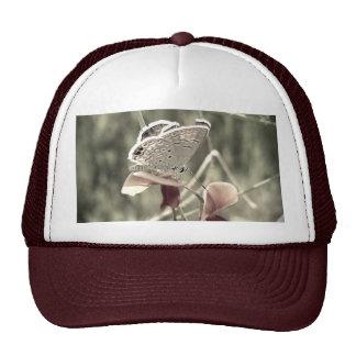 Gorra de la polilla