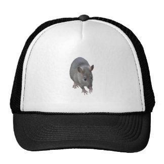 Gorra de la rata