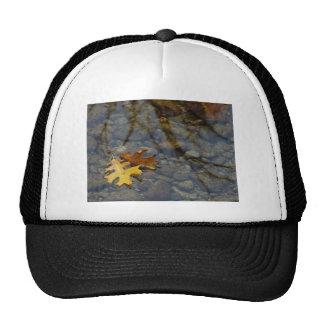 Gorra de la secoya