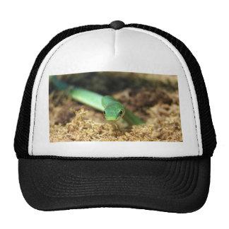 Gorra de la serpiente verde