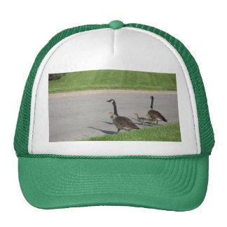 Gorra de la travesía del ganso