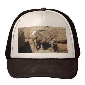 Gorra de las ovejas de Bighorn