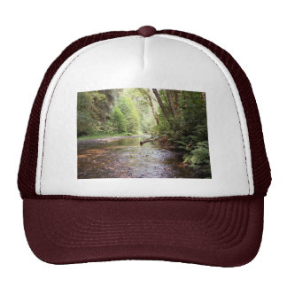 Gorra de las secoyas de Prairie Creek