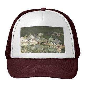 Gorra de las tortugas