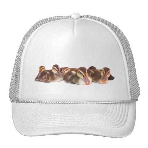 Gorra de los anadones
