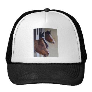 Gorra de los caballos