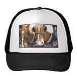 Gorra de los caballos de proyecto de Clydesdale