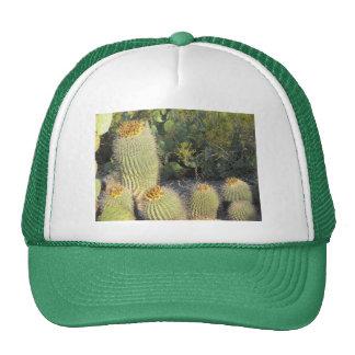 Gorra de los cactus de barril