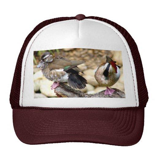 Gorra de los patos