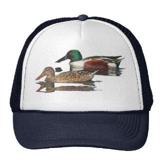 Gorra de los patos cuchara septentrionales que nad