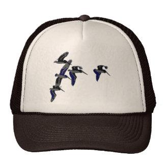Gorra de los pelícanos del vuelo