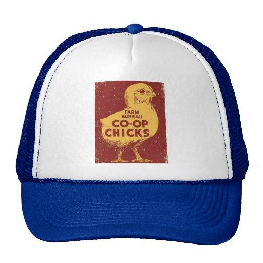 Gorra de los polluelos del gallinero de la oficina