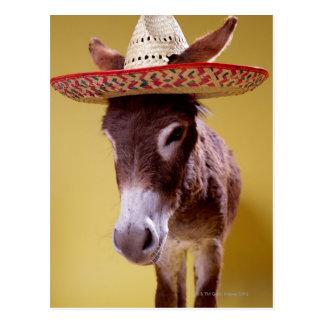 Gorra de paja del burro que lleva (hemonius del postal