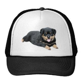 Gorra de Rottweiler