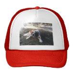 gorra de St Bernard