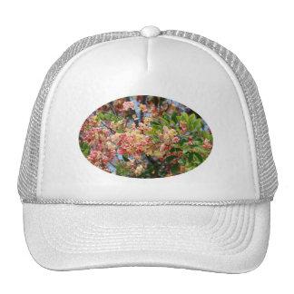 Gorra del árbol de la ducha de arco iris