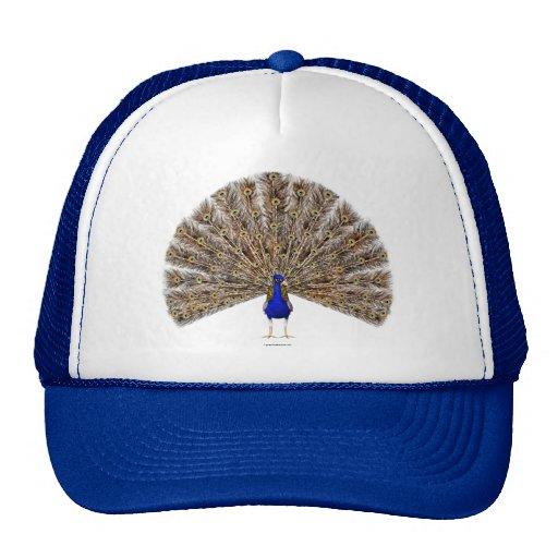 Gorra del azul de pavo real