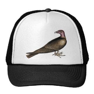 Gorra del buitre de Turquía