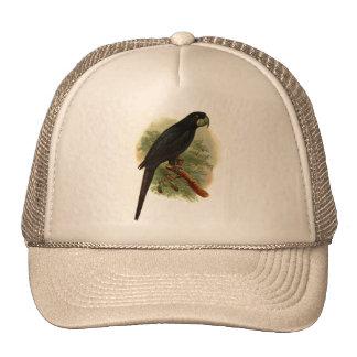 Gorra del camionero de Anadorhynchus Purpurascens