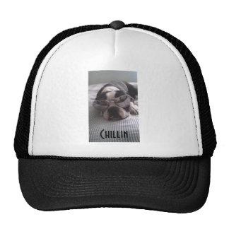 Gorra del camionero de Boston Terrier