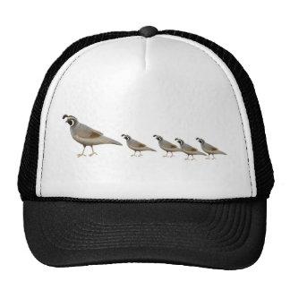 Gorra del camionero de la familia de las codornice