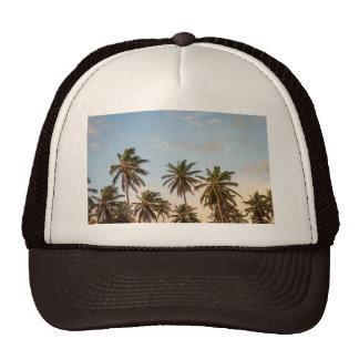 Gorra del camionero de la palmera