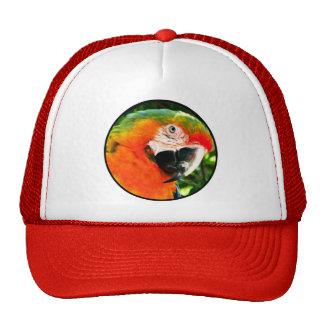 Gorra del camionero del Macaw del escarlata