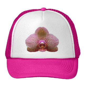 Gorra del camionero - estrella de la tierra