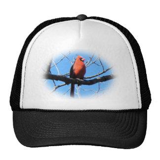 Gorra del cardenal del invierno