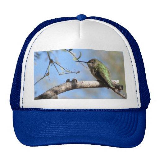 Gorra del colibrí