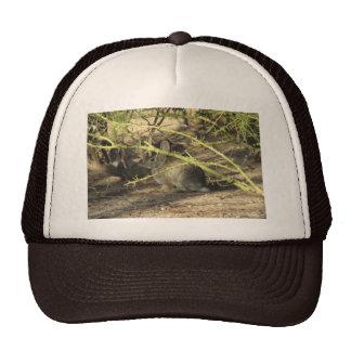 Gorra del conejo de conejo de rabo blanco